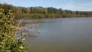 Rothenbach-Teich (Vogelsberg) - Foto: privat