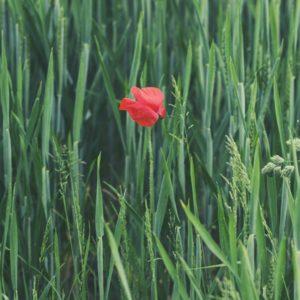 Blume - Foto: Kai Brune, Unsplash