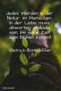 Jedes Werden in der Natur, D. Bonhoeffer - Gestaltung: privat