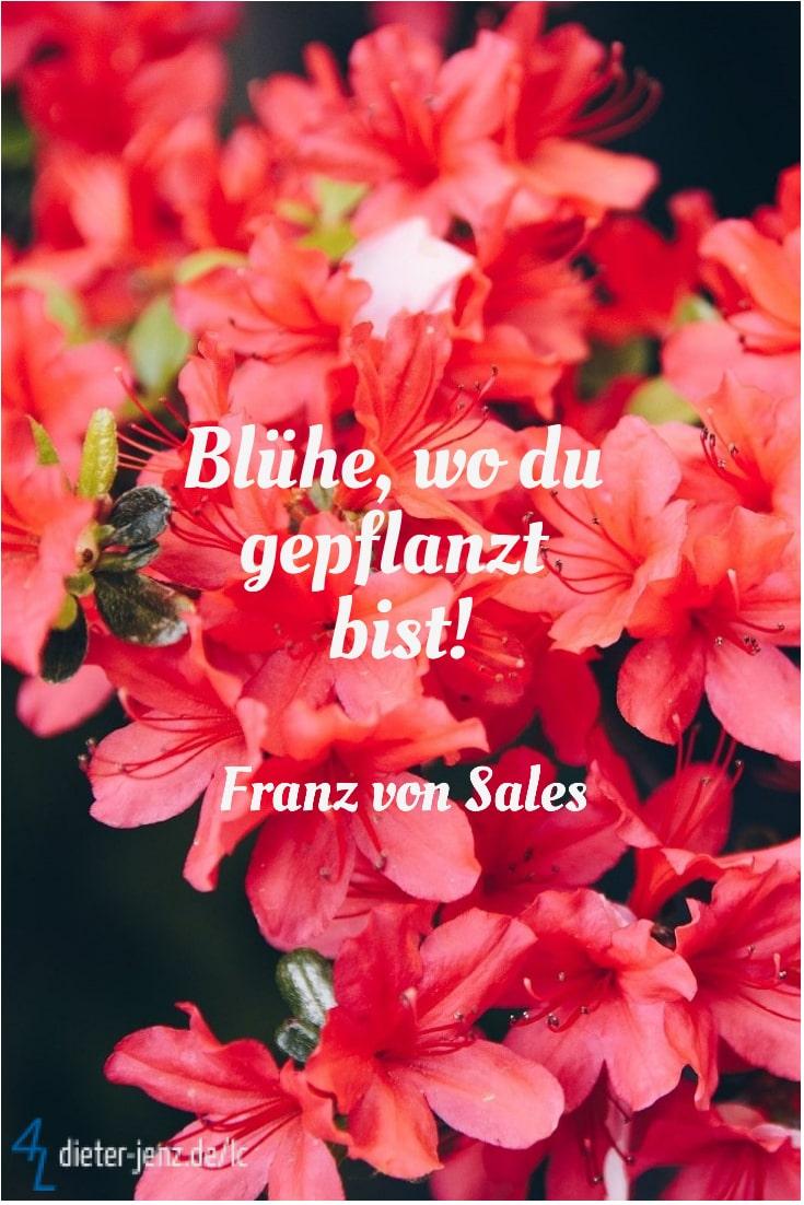 Blühe wo du gepflanzt bist, F. v. Sales - Gestaltung: privat